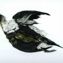 black-and-white-sea-bird_edited-1