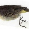 Unknown Bird 2