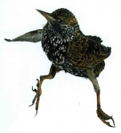 sitting-bird