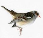 sparrow_edited-2