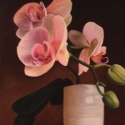 orchid for Haley
