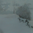 Winterreise viii