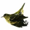 bird, april, 19