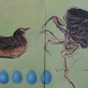 robin-eggs