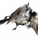 shattered-bird