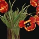 Orange Tulips in Vase