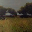 Amherst Grasses